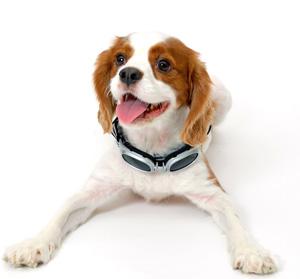 噛み犬の法則と3パターンの噛みつき方