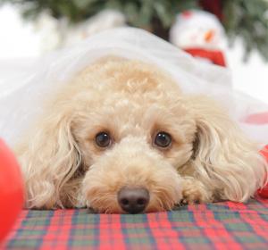 森田誠の犬しつけ法、飼い主と愛犬の主従関係の秘密