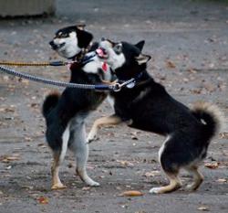 愛犬が他の犬に噛みつき、ケガをさせてしまった…賠償は?