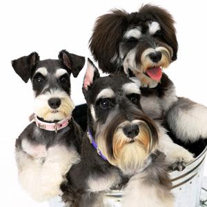 狩野誠の「愛の家庭犬しつけ法」とは