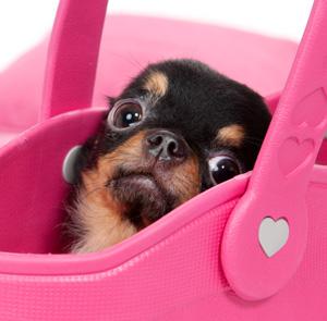 子犬の社会化…犬の問題行動予防にもなります