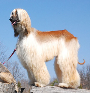 どんな犬種でもしつけできるの?森田誠の愛犬と豊かに暮らすためのしつけ法