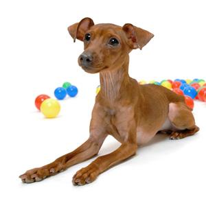 山本卓の愛犬のしつけ講座、成犬もしつけできる理由