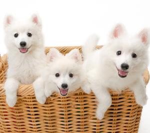 森田誠さんと山本卓さんの犬しつけ法、それぞれこんな人に向いている!
