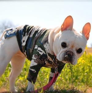 山本卓の愛犬のしつけ講座、犬の爪切り耳掃除の方法も収録