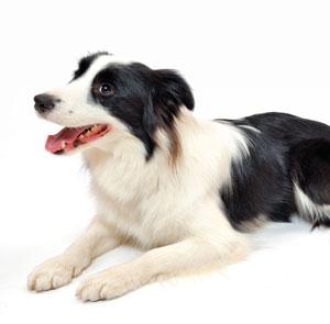 預託訓練の後、家に帰ってくると指示を聞かない犬…その理由とは