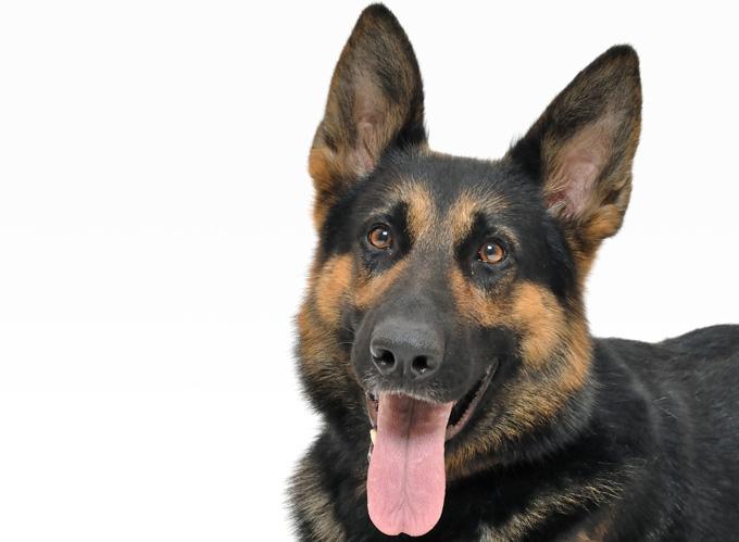 「藤井聡が教える犬のしつけ法」辛口になってしまったレビュー