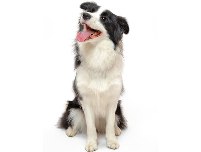 山本卓の「愛犬のしつけ講座」の特典を作成中です