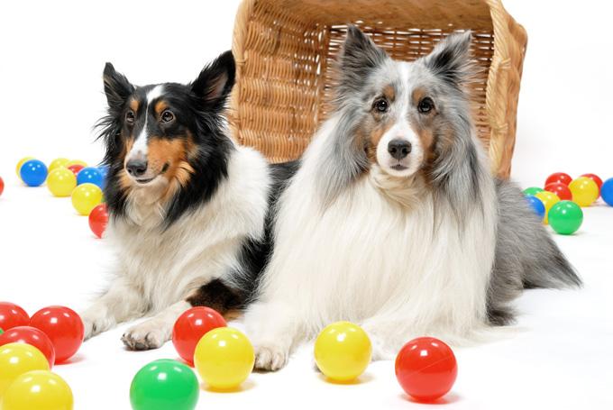 なぜ、この犬種がいいよ!と具体的な犬種をあげないのか?