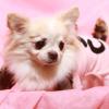 遠藤和博さんと森田誠さんの犬しつけ法を比較してみた!