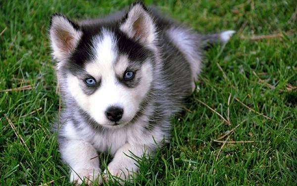 オオカミの群れと人間&犬の群れ(家族)の違いとは