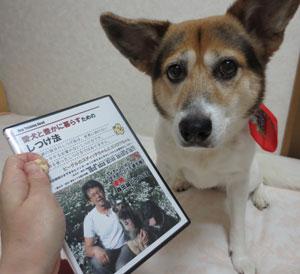 森田誠の犬のしつけ法の選べるDVDの選び方