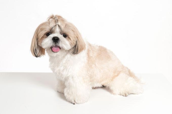 藤井聡の犬しつけDVD、売れているのに当サイトの評価が低い訳