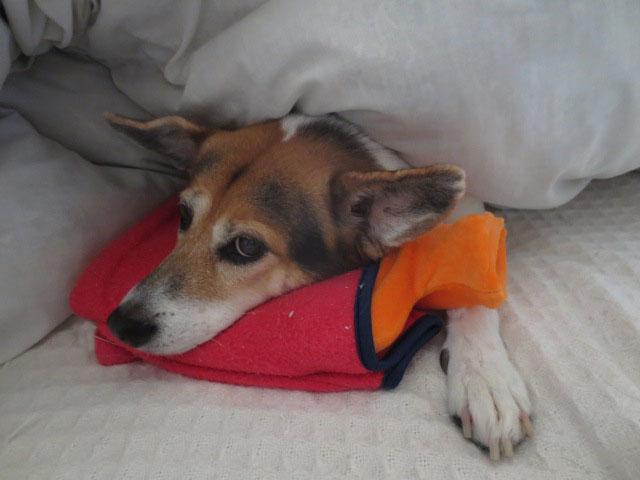 愛犬の防寒対策は湯たんぽがおすすめ~パピたんと湯たんぽ