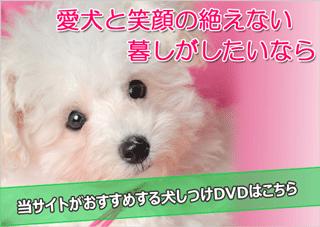 犬しつけDVD 森田