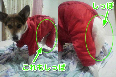 puppy-iya