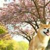 今夜、森田誠さんがTVに出ることが解りました!日曜ファミリアやっぱり犬も好き!