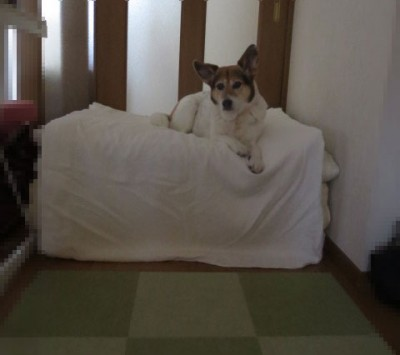 愛犬が10歳になったときに取り入れた物…滑り止めマット