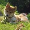「森田誠の犬しつけをラクラク成功させるための秘密をレポート」お褒めの言葉をいただきました。