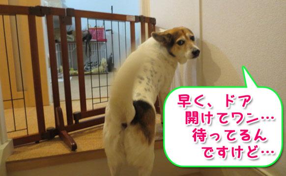 リッチェル「ペット用木製おくだけドア付ゲート」を買ってみました