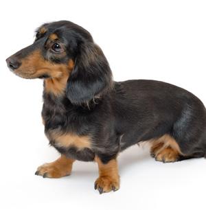 犬の吠え声がうるさいと隣の家からクレームがきたとき考えられること