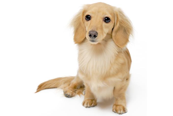 マンションで犬と暮らす 2つの騒音対策の方法