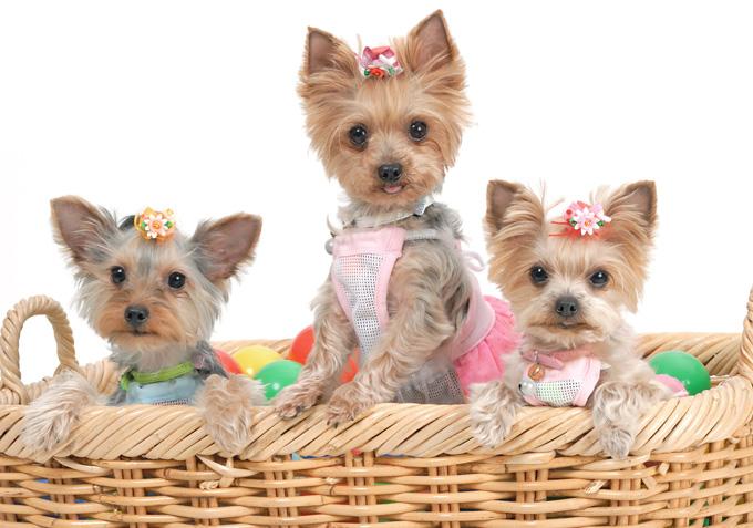 無駄吠え、噛みつき…犬の問題行動を予防する5つの方法