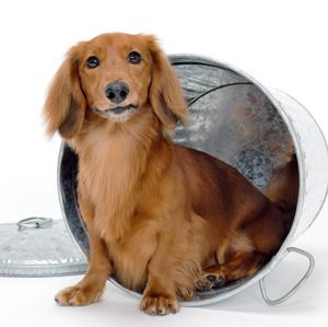 しつけの前に大切な3つのこと 森田誠の犬しつけ…動きたい、感情を満たしてほしい、噛みたい