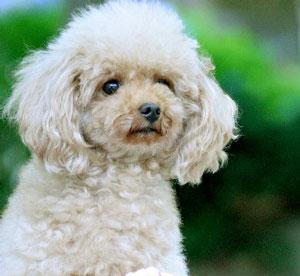 災害時、愛犬も一緒に避難所へ入れる?