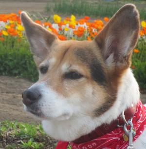 森田誠の愛犬と豊かに暮らすためのしつけ法、実践してみた!