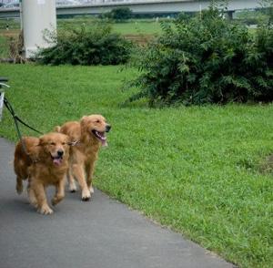 犬のお散歩、引っ張り癖…運動不足とストレスが原因かも