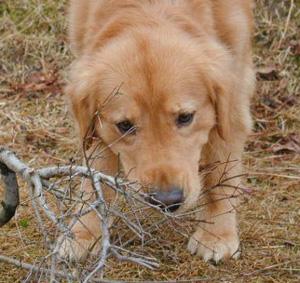 犬の噛みつき事故…飼い主のための個人賠償責任保険