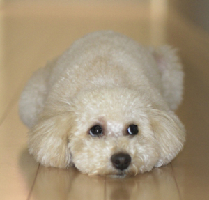 愛犬の問題行動の原因を探るためのプロファイル項目とは