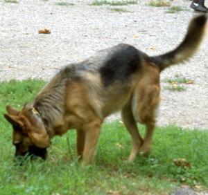 愛犬が他人を襲った場合、飼い主は刑事責任が問われるの?