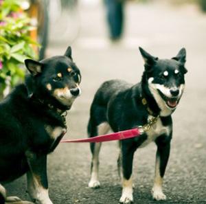 『森田誠の愛犬と豊かに暮らすためのしつけ法』首輪の話