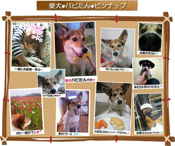 puppy_frame680_1