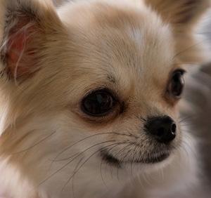 愛犬が獣医さんを噛んでケガさせてしまった…賠償は?