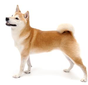 森田誠の犬のしつけ法、成犬のかみつきや無駄吠えも直せる?
