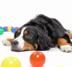 これで失敗しない!犬しつけDVDを注文する際に絶対に知っておくべき「選び方」の極意