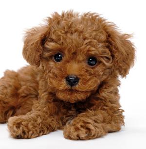 愛犬のしつけ講座…山本卓さんのしつけのポリシーとは