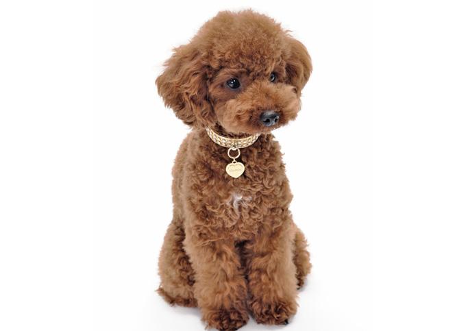 犬種の選び方…仕事別5グループ、犬種ごとの能力を知る