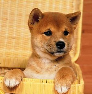 山本卓の愛犬のしつけ講座、子犬を初めて迎える方にオススメな理由