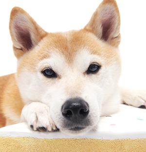 """山本卓の愛犬しつけ講座 """"噛みつく犬""""のしつけが優れている理由"""