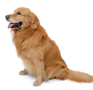 ペット賠償責任特約で支払われている金額 犬噛みつき事故だけじゃない!