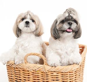 森田誠さんと山本卓さんの犬しつけ法 甘噛みの直し方を比較