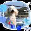 人気犬種ランキング…最新!2015