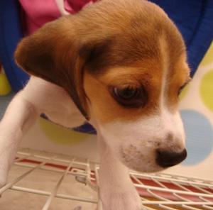 マンションで子犬がかじって困る…ペット可物件でも現状回復義務が課される
