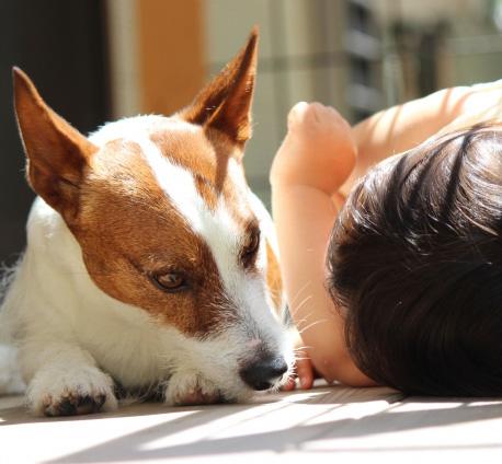 森田誠の愛犬と豊かに暮らすためのしつけ法…子供と一緒にしつける方法
