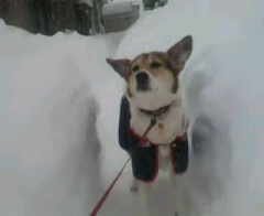 「いーぬは喜び庭かけまわり~♪」~愛犬パピたんの初体験