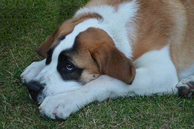 dog-172352_680